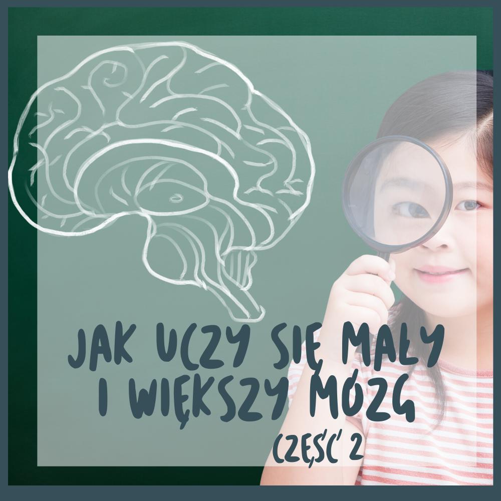 """Część teoretyczna o tym """"Jak uczy się mały i większy mózg?"""""""